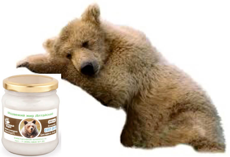 Медвежий жир – домашний лекарь